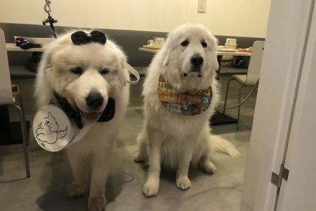 超大型犬のお客様