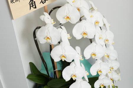 開店にいただきましたお花の数々 どうもありがとうございました。