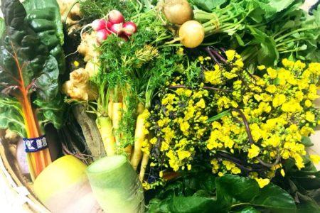 本日ランチより 個数限定 「鎌倉野菜と鎌倉パンの チーズフォンデュセット」