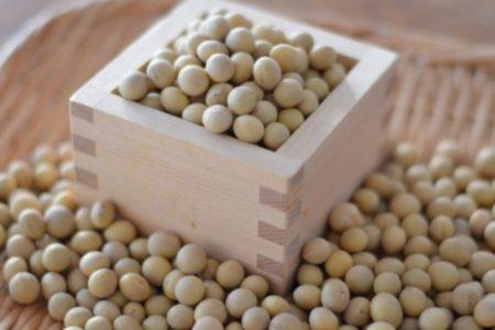 スペシャル大豆「たまふくら」について