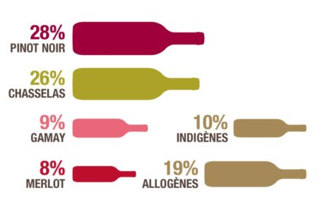 スイスでは約240種のブドウ品種が栽培されています