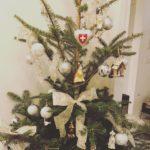 早くも本物のモミの木で出来たクリスマスツリーがお目見えしております